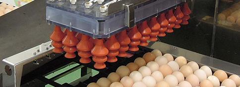 面向种蛋孵化场