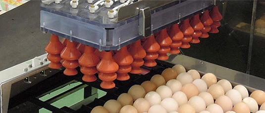 面向種蛋孵化場